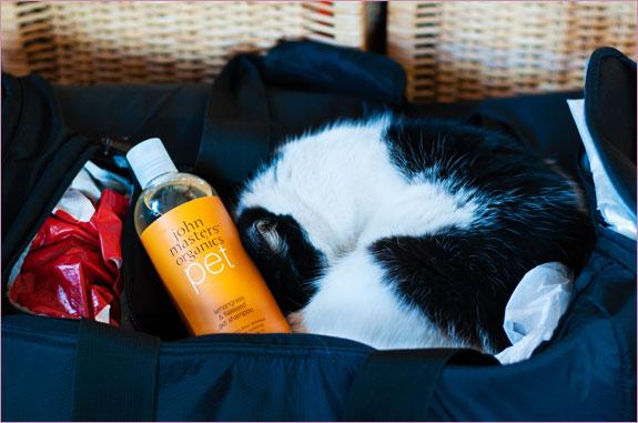 szampon dla zwierząt